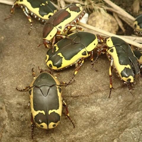 insectarium140828_d.jpg
