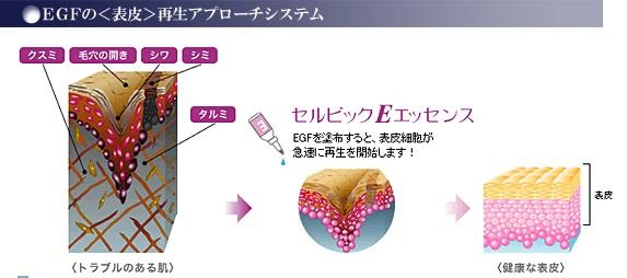 EGFの表皮再生アプローチシステム