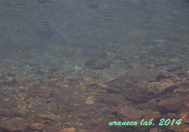 8月25日雨の大正池4