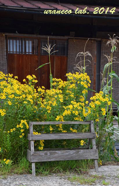 9月1日軒先の黄色い花