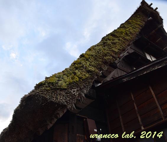 9月7日苔むした屋根