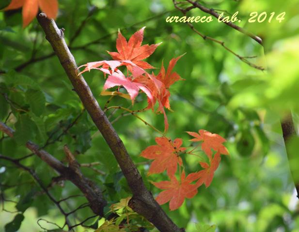 9月15日小さい秋