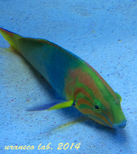 10月3日熱帯魚
