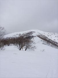 kumami_R.jpg