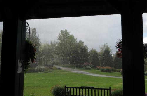 雨ザーザーの雨柴女