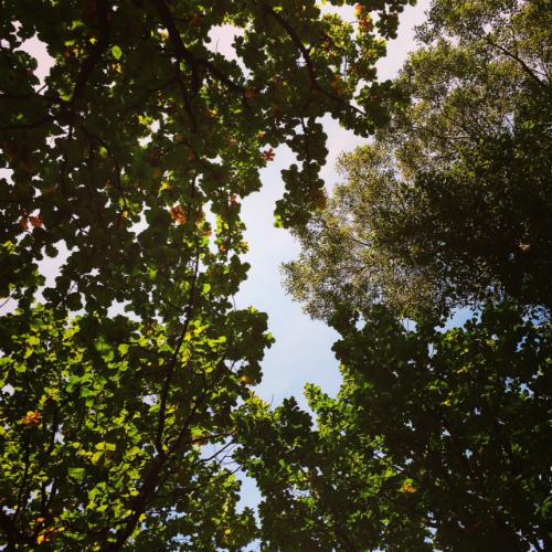 柏の葉っぱと十勝の空