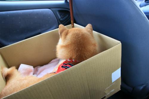 なんちゃってドライブボックス!!!