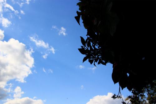 秋の天気と雨柴女