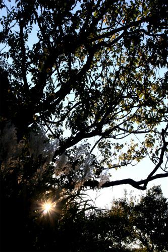 夕暮れの平岡公園