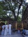 ④金剛座と菩提樹