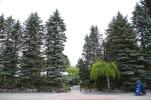 並ぶ針葉樹