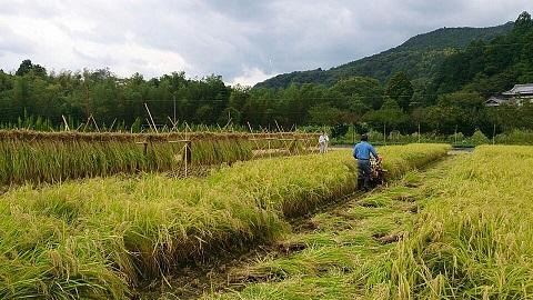 あいがも、無農薬、天日干し、無化成肥料。