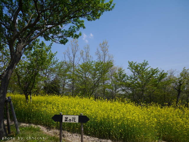 ajiwai-village-19.jpg