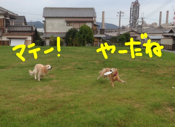 IMG_2914.jpg