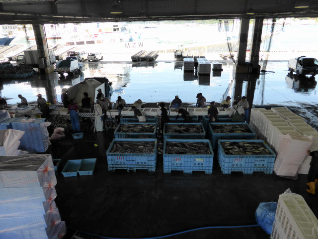 気仙沼の魚市場1