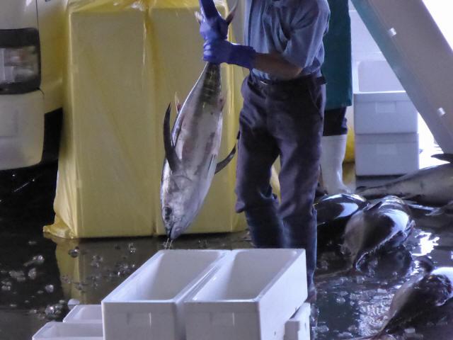 気仙沼の魚市場2