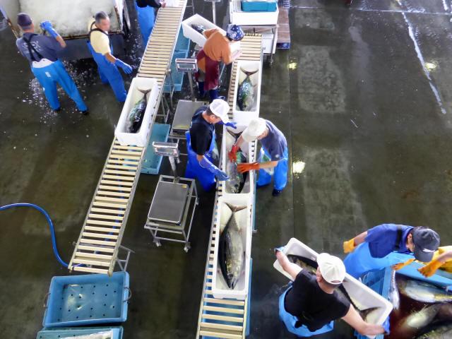 気仙沼の魚市場4