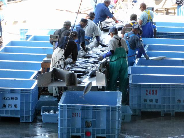 気仙沼の魚市場7