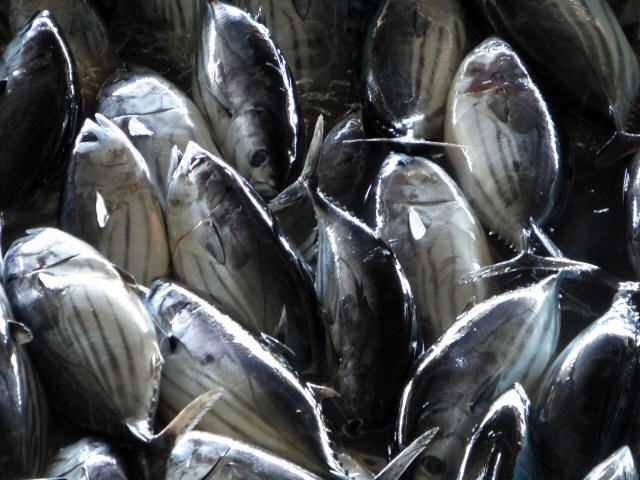 気仙沼の魚市場8