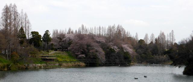 泉南CCの吊橋4