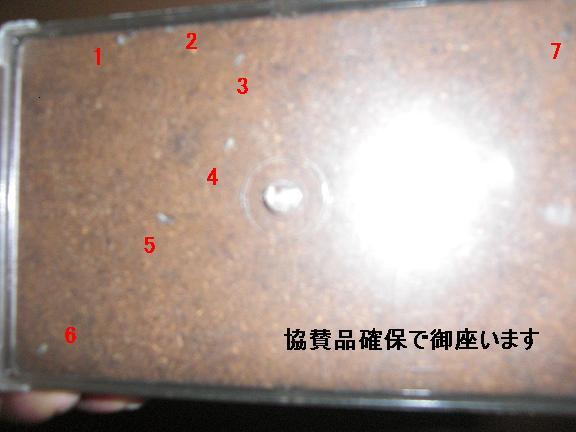 CIMG4715.jpg