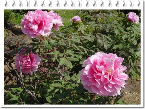 DSC02804-20140509-112017.jpg