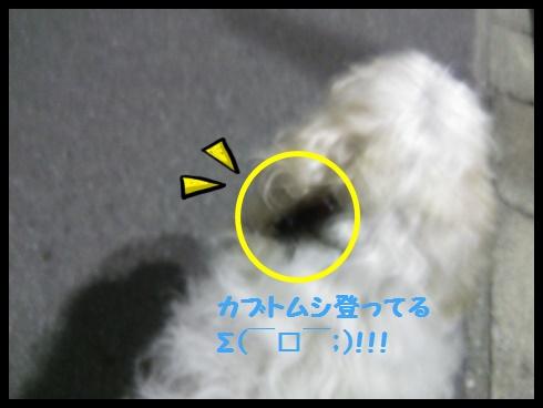 DSC_0266-20140902-233247.jpg