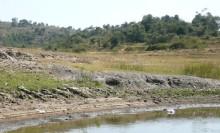 インドでアピスト-水辺