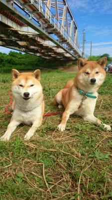 サクラ&ユウヤ