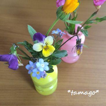 tamago_153.jpg