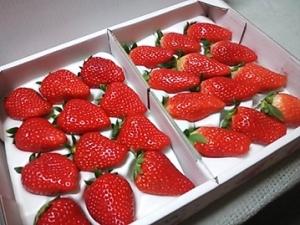 4苺ちゃん