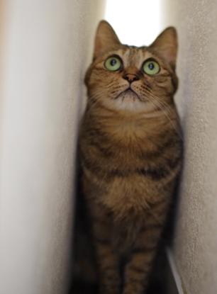 さっきまで居たキララがこっそり物陰に隠れて行くのを待ってました(笑)