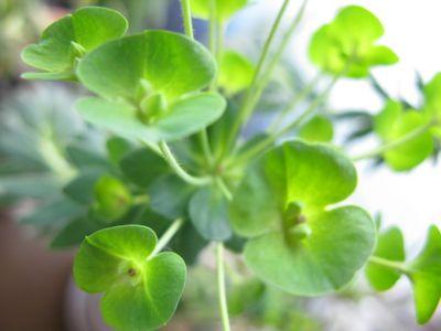 140306-植物1