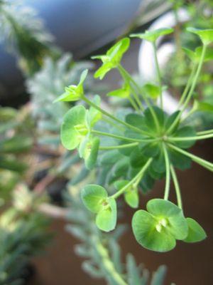140306-植物2