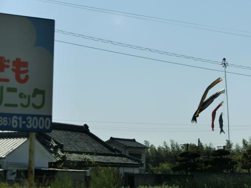 鯉のぼり001