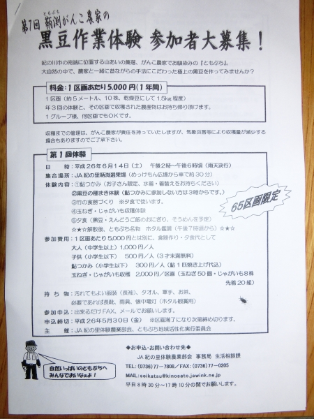 黒豆作業体験001