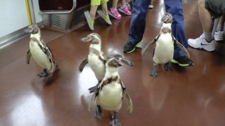 1ペンギン列車