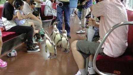 1ペンギン列車2