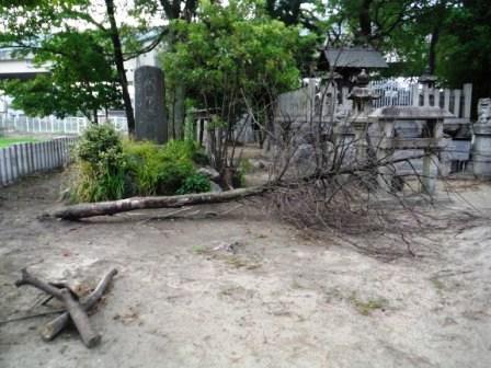 1神社の木が倒れてる