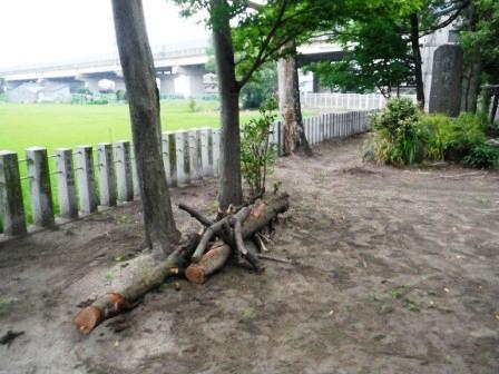 1神社の木が倒れてる5
