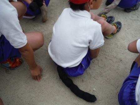 1小学校運動会2014 2