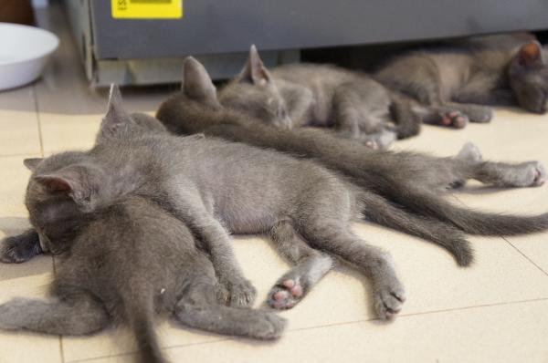 kittens6