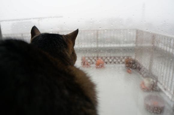 雨ザーザー降ってきて・・・