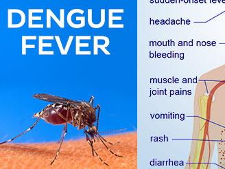 dengue01-1.jpg