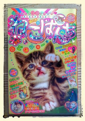 ねこぱんち猫の手号