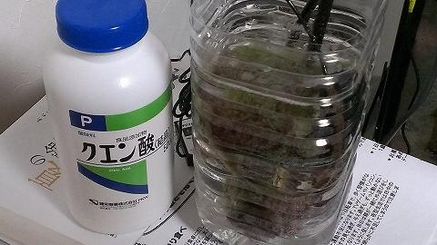 クエン酸漬け20140314