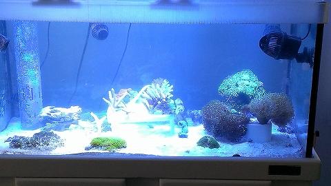 サンゴ戻し20140321