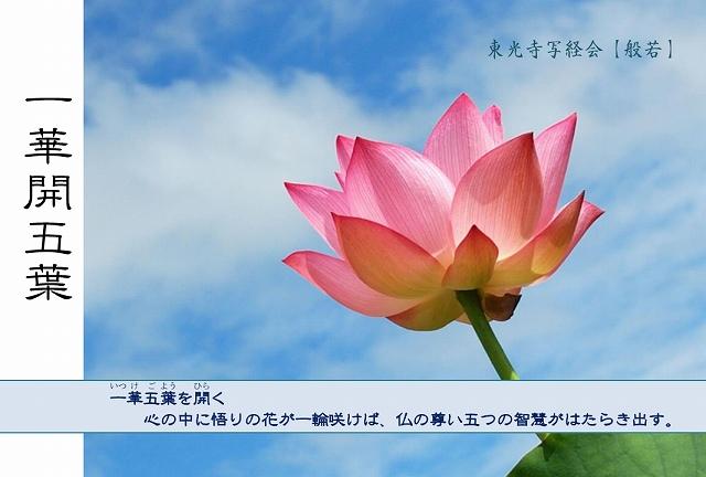 640一華開五葉 絵葉書.jpg