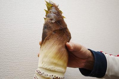 タケノコ140411