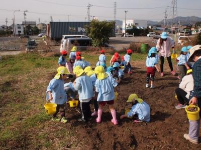 園児による畑の管理1403032